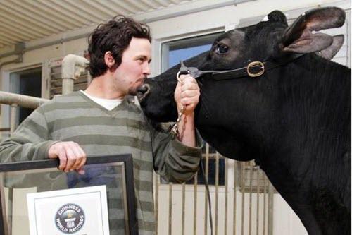 Largest Milk Yield