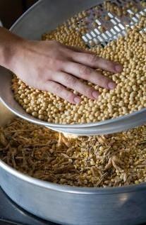 soybean shipments
