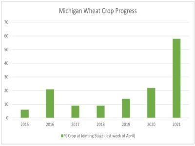 wheat progress