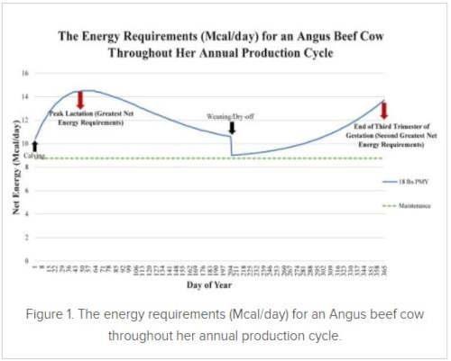energy requirement
