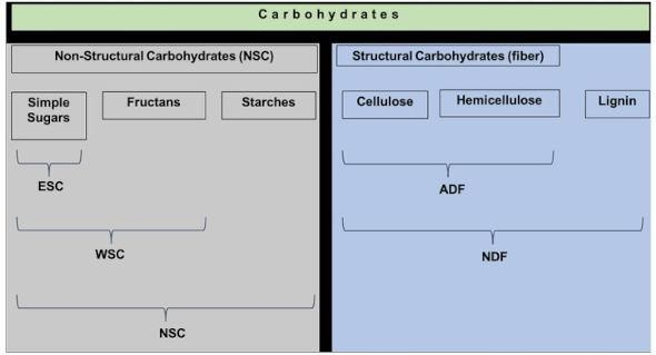 Description of the different types of carbohydrates, and the different fractions that are measured on a feed analysis. Illustration credit: Laura Kenny, Penn State.