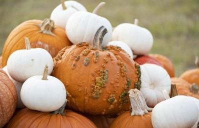 Creative pumpkin-themed decorations are a way to use the popular gourd this fall season