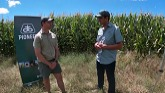 Basic Aspects of Corn Silage with Ri...