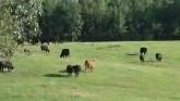 U.S. Farmers and Ranchers Talk Susta...