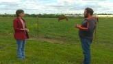Managing Equine Obesity