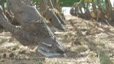Canola Watch: Equipment Sanitation