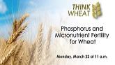 Think Wheat - Phosphorus and Micronu...