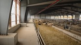 OVINO Sheep Farm Success Story