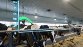 Dairy Farmers of Tomorrow - Lets Cr...