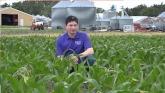 Phosphorus Management In Corn