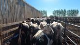 Shuffling Cattle, Parlour Issues, an...