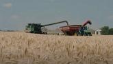 Wheat harvest in Ontario