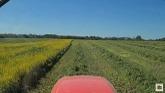 Cutting really good hay