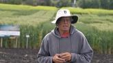 Field day at the U of A wheat breedi...