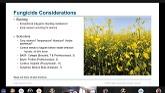 Cargill Specialty Canola Virtual Fie...