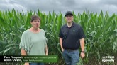 Scouting for Northern Corn Leaf Blight