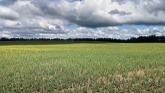 Crop tour, northern Alberta