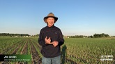 Side-Dressing Corn Silage with Nitrogen for Higher Tonnage and Higher Quality?