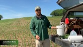 How to Conduct Tissue Sampling of Corn