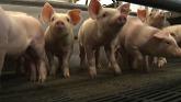 Weaning piglets – indoor breeding