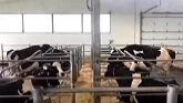 Ottawa Dairy Farm Tour