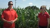 PRIDE Seeds Fungicide Application