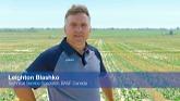BASF InVigor 2021 - Clubroot (From t...