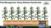 Managing Western Corn Rootworm