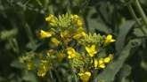 Extension Explains - Pollinators