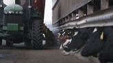 The science of Enogen® feed corn hybrids