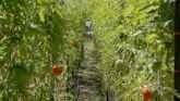 Potential Pitfalls of Urban Farming
