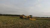 Sweet Corn harvest is under way