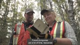Sustainable forest management supports wildlife habitat