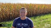 Corn Fungicide Timing and Optimizing...