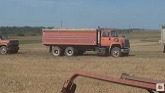 The 7721 finally does some acres! bin busting oats and the chickens big day!