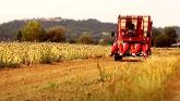 Spapperi Onion Seed Harvester