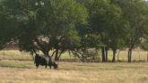 Cow-Calf Corner - Beef Cattle Milk P...