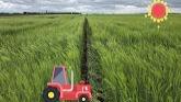 Best kept secret in growing barley