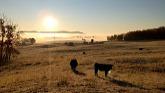 Working on Alberta Ranch