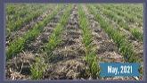 Fungicides + Foliar Application= a r...