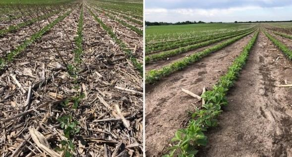Figure 1. Residue cover under high moisture corn (left) and corn silage (right) during soil sampling in late spring. Residue cover remaining on the soil surface from high moisture corn harvest helps to intercept the impact of raindrops, slow the speed of runoff, and protect the soil surface from erosion, unlike the visible signs of erosion in corn silage (right). Additionally, surface residue can contribute to soil nutrients, structure and infiltration, organic matter and feed for soil microbes.