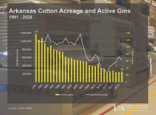 COTTON ACRES AND GINS — Graph showing relationship between number of active gins and cotton acreage in Arkansas. Numbers from National Agricultural Statistics Service. (U of A System Division of Agriculture image by Scott Stiles)