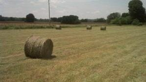 Each ton of hay harvested takes with it about 13 lbs of P2O5 and 50 lbs of K2O