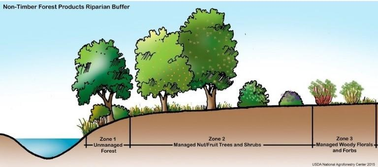 riparian-buffers-for-field-crops-hay-and-pastures