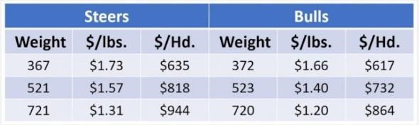 Steers are consistently more valuable than bulls of the same weight. Above is a comparison of three weight classes of #1, large frame bulls and steers. Prices courtesy of the Alabama Livestock Market News, July 16, 2021
