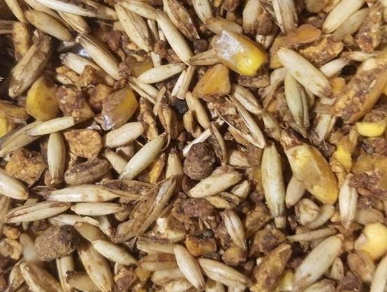 Sweet feed/textured Feed
