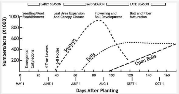 time-to-protect-your-cotton-from-premature-defoliation-due-to-foliar-diseases