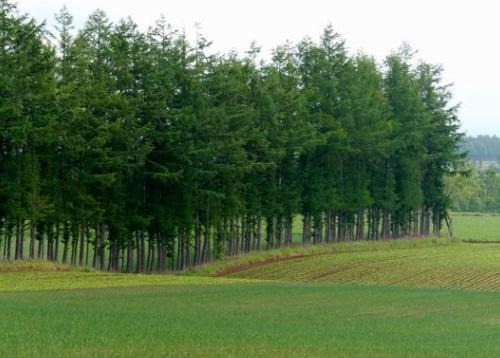 Woman on farm using Artificial Intelligence-based technology. Image courtesy of Getty Images.