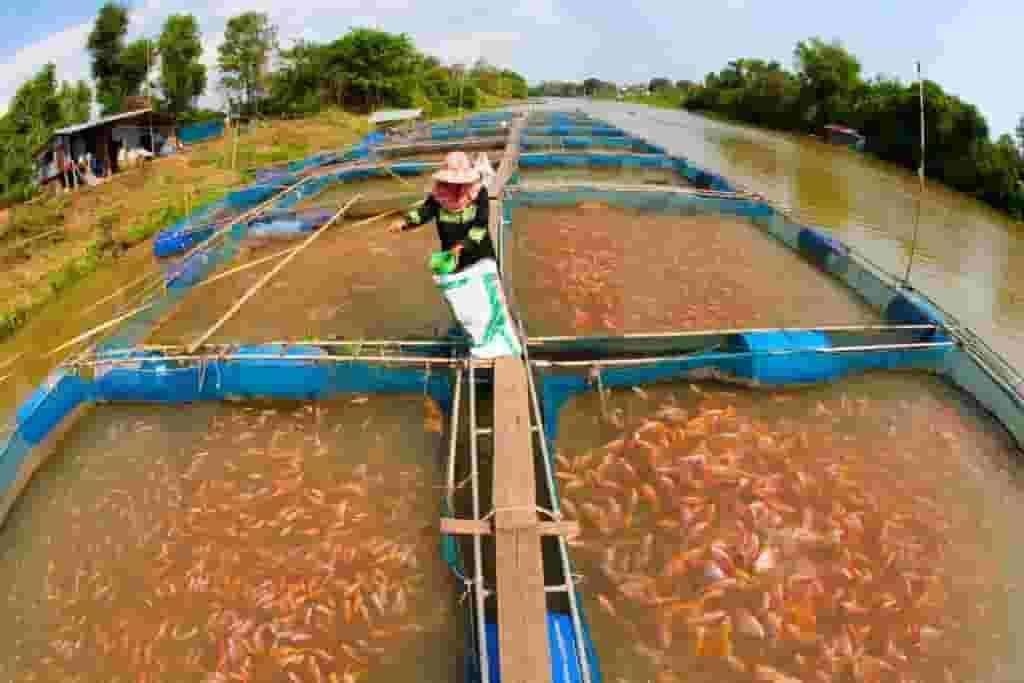 Pond System for fish farming