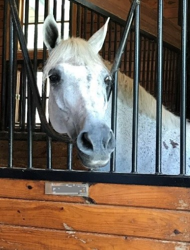 The front of this horse's stall has an anti-weave grill installed
